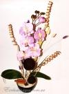 Ароматная композиция орхидеи с сухоцветами