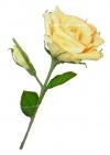 Двойная бежевая/красная/розовая шоколадная роза