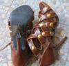 Коричневые женские босоножки в камнях хамелион